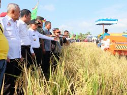 Potensi Pertanian dalam Pelalawan Makmur