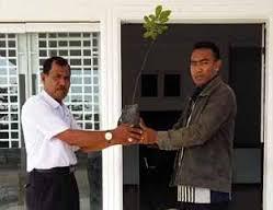 Disbun Rohil Berikan Bibit Pohon Pelindung ke SMAN 5 Bangko Pusako