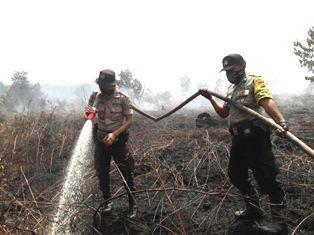 Pasca Pemadaman di Langgam, Tim Karhutla Pelalawan Konsentrasi di Pulau Muda